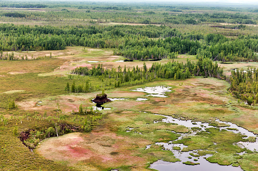 Northern Landscape Endless Forests Impenetrable Swamps In The North Stock Photo - Download Image Now