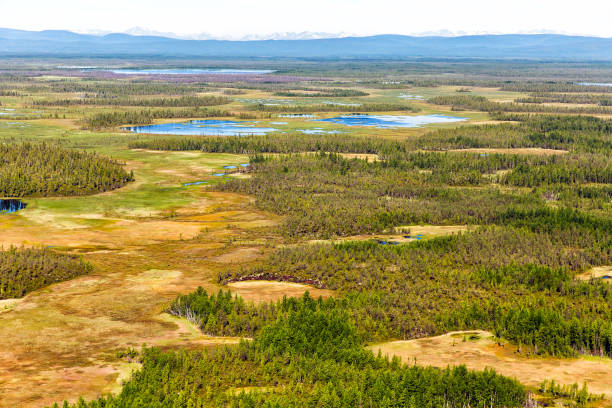 Northern landscape. Endless forests. Impenetrable swamps in the north Northern landscape. Endless forests. Impenetrable swamps in the north taiga stock pictures, royalty-free photos & images