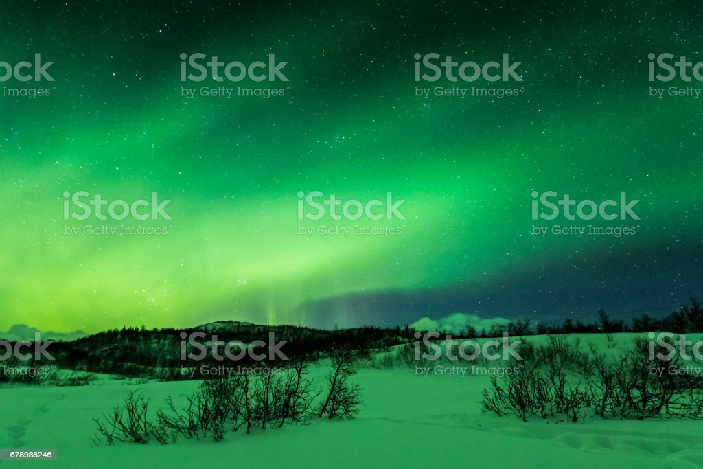 Northern lights above trees in a winter landscape. royalty-free stock photo