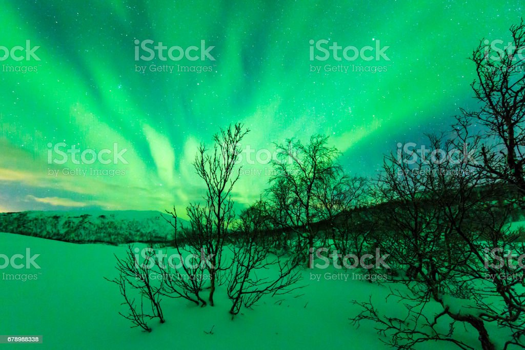 Northern lights above trees in a winter landscape. photo libre de droits
