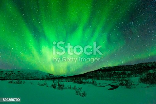 Northern lights Aurora Borealis in the night. A arctic, snowy winter landscape with trees and bushes on the foreground. The sky is clear, stars are visible