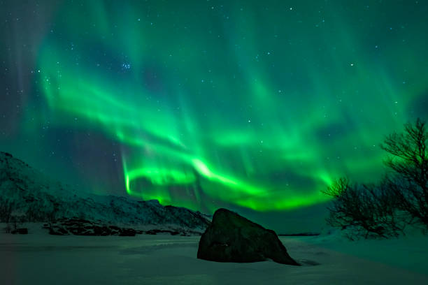 Northern Lights or Aurora borealis in Lofoten islands, Norway. Polar lights in a starry sky over a snowy winter landscape stock photo