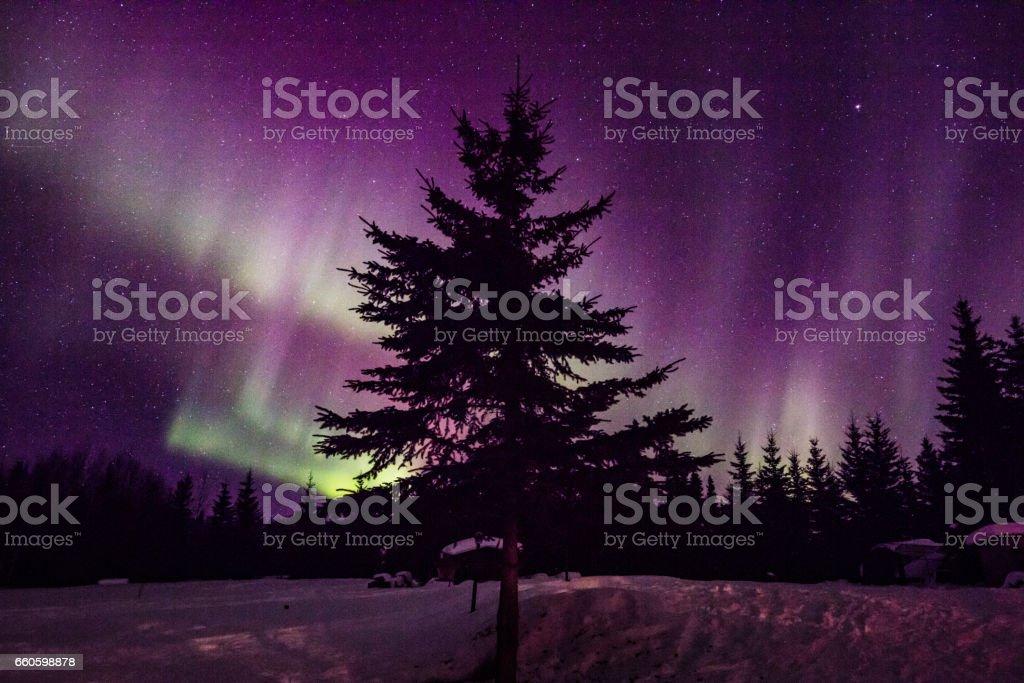 Northern Lights3 royalty-free stock photo