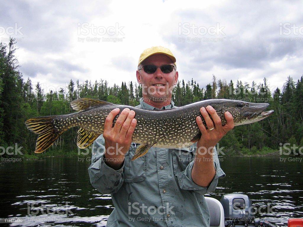 Northern Pike stock photo