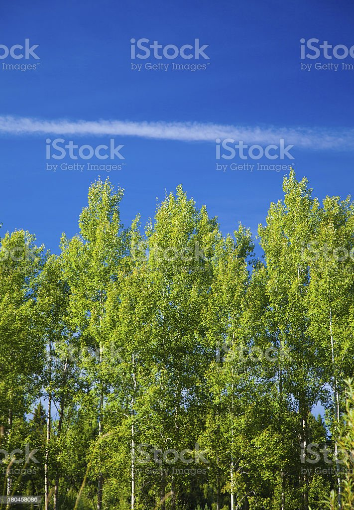 northern summer royalty-free stock photo