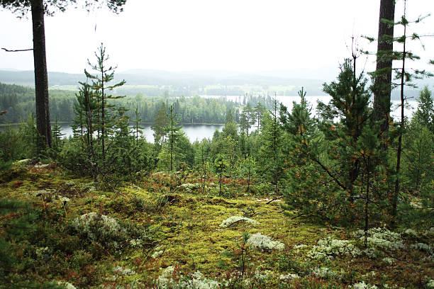northern sweden landscape - pine forest sweden bildbanksfoton och bilder