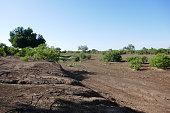 istock Northern Tuli Region, Botswana 1277534801