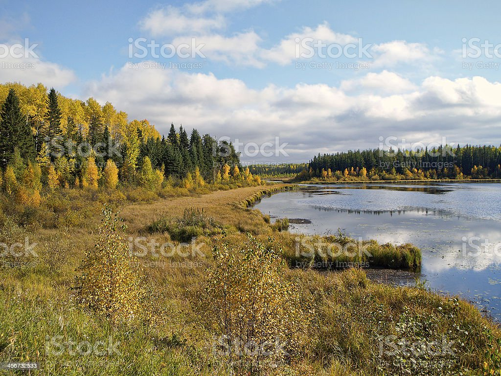 Northern Wetland stock photo