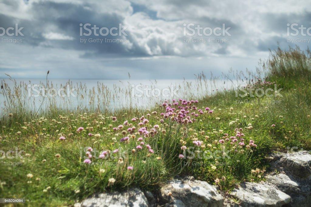 Northumberland coast, UK, stock photo