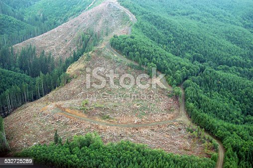Patches of logging activity dot the Douglas Fir forests of western Washington state.