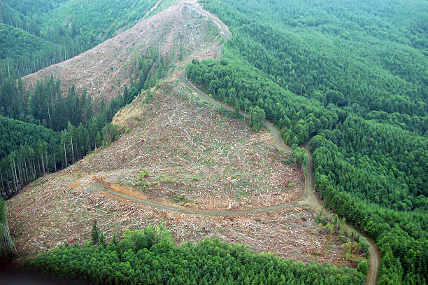 Northwest Clearcut Patches of logging activity dot the Douglas Fir forests of western Washington state. deforestation stock pictures, royalty-free photos & images