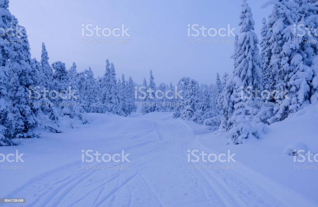 Norway: Hazy winter weather at a cross-country ski trails through the woods stock photo