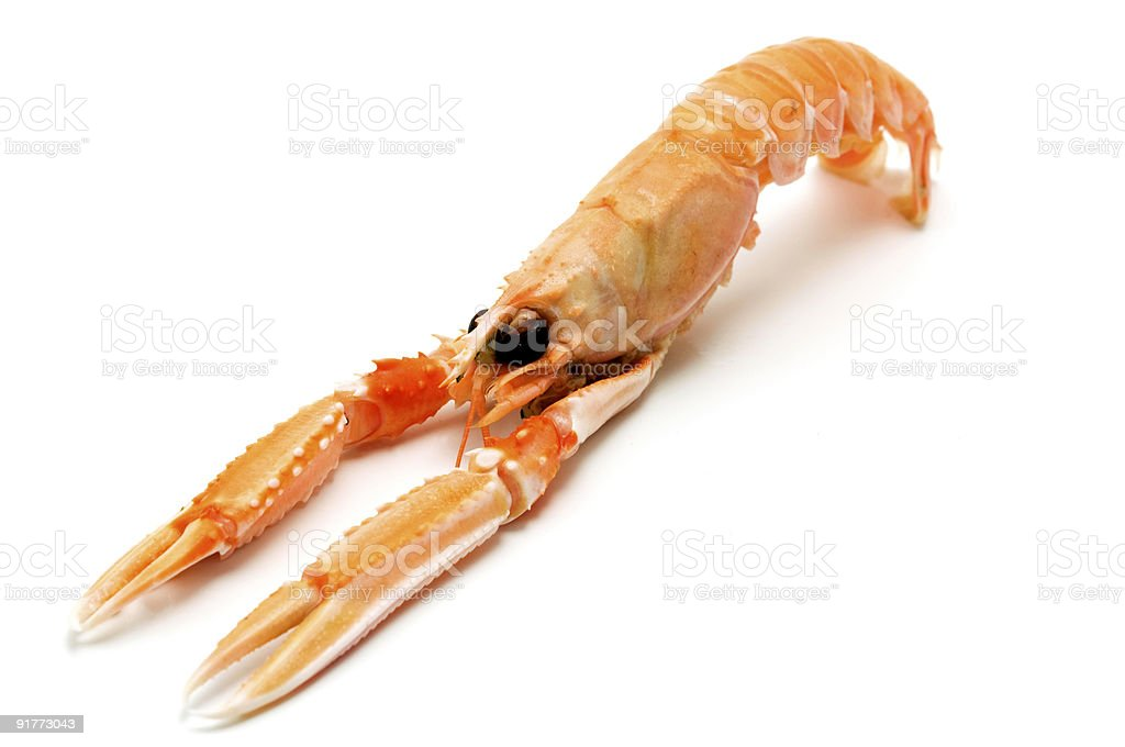 Norway lobster royalty-free stock photo
