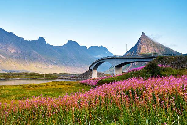 Norway sunny summer day. Bridge over the fjord. - foto de acervo