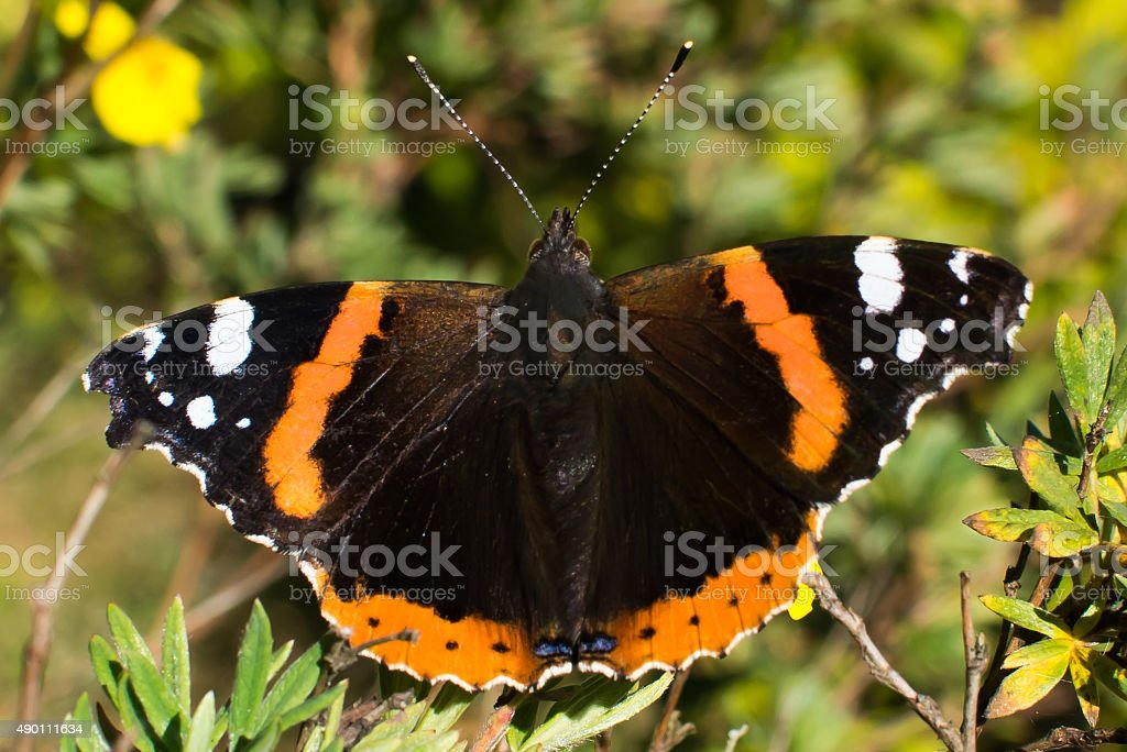 Norwegian butterfly and end of summer stock photo