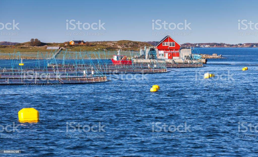 Norwegian fish farm for growing salmon stock photo