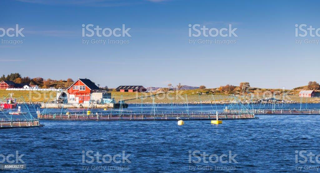 Norwegian fish farm, growing salmon in nature stock photo