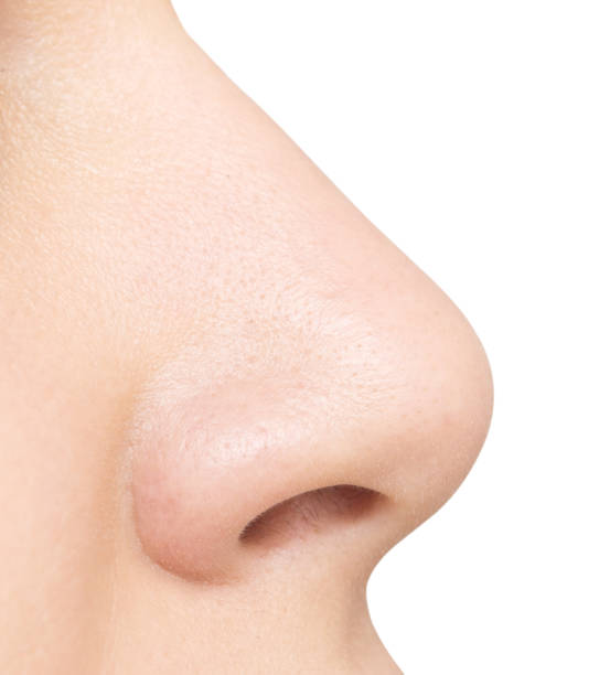 nose isolated on white stock photo