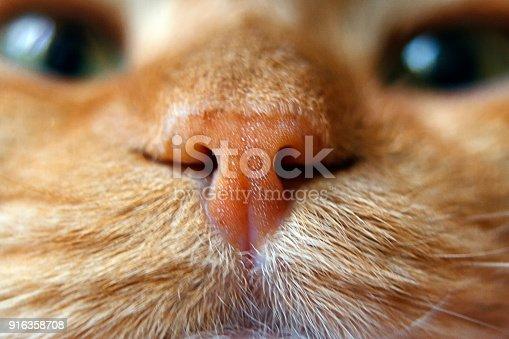 Nose of a red cat in focus macro