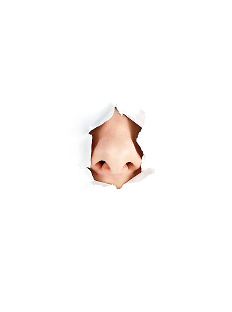 A nose peeping out from white torn paper stock photo