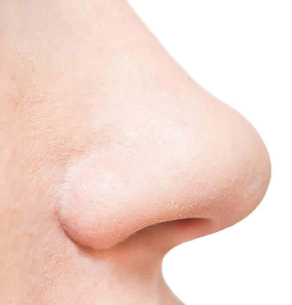 nose nose isolated on white background human nose stock pictures, royalty-free photos & images