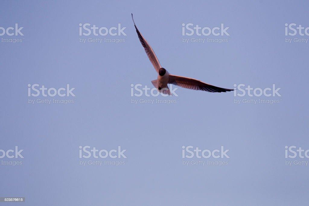 Nosedive bird stock photo