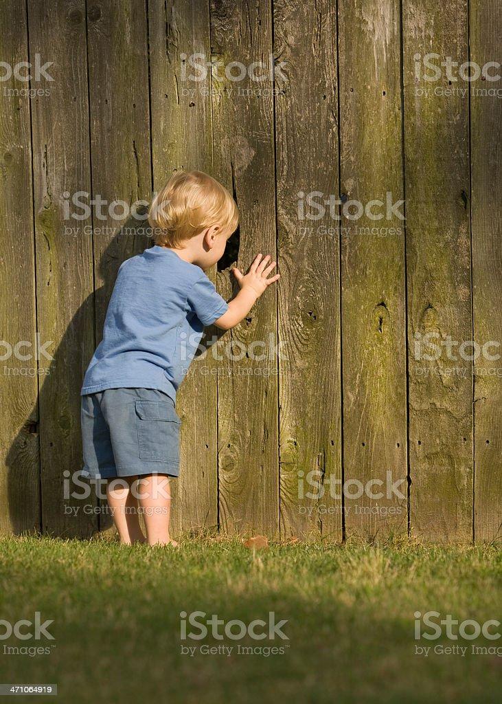 Nosey Little Neighbor royalty-free stock photo
