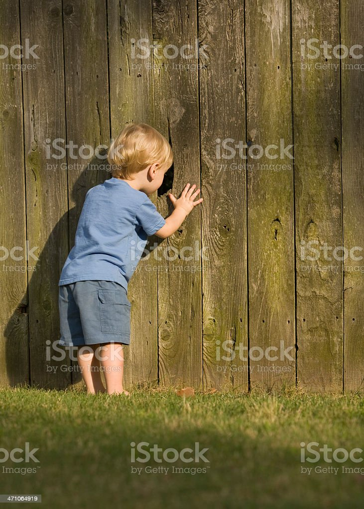 Nosey Little Neighbor stock photo