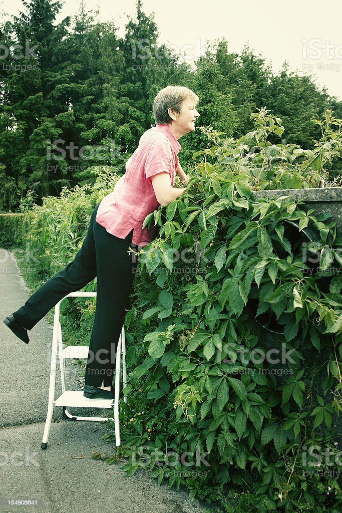 Nosey neighbour looking over hedge stock photo