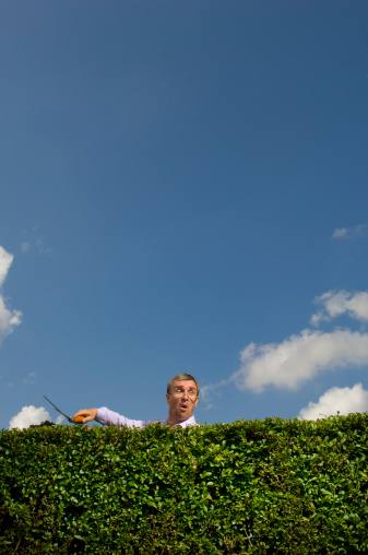 nosey neighbour takes time out from gardening to peep over the hedge