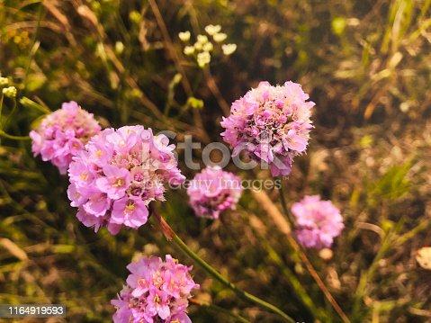 Melancholy, autumn, summer, flowers, July, meadow