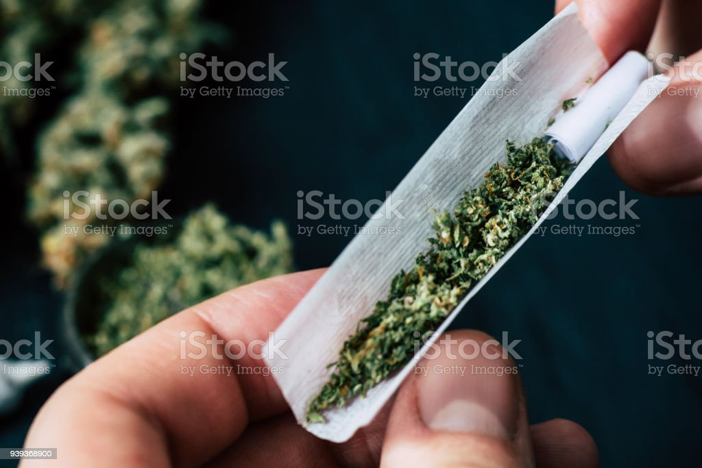 Not fully rolled jamb joint in the hands of a man marijuana weed The concept of marijuana legalization and the use of cannabis for medical purposes stock photo