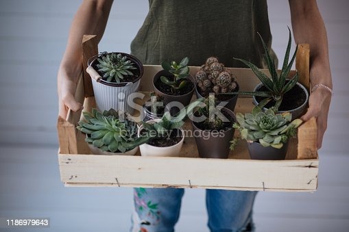 Female botany expert showing off her succulent plants collection