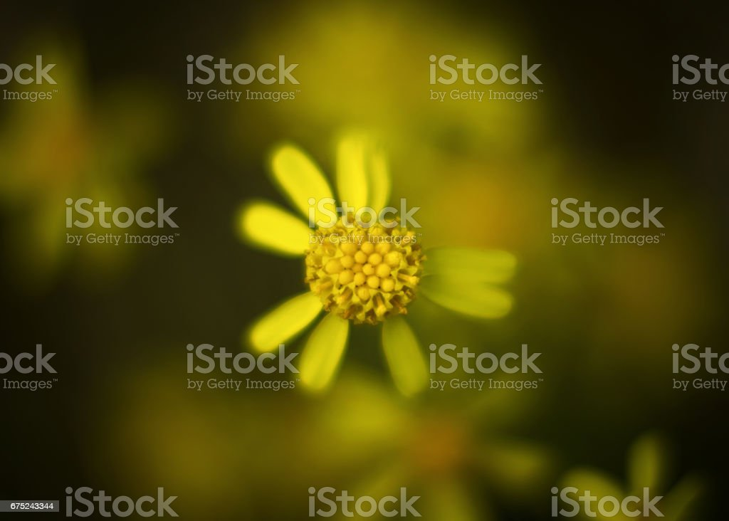 Not perfect petals royalty-free stock photo