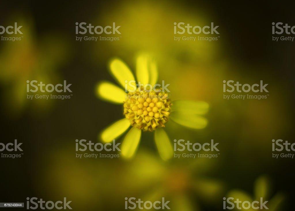 Not perfect petals stock photo