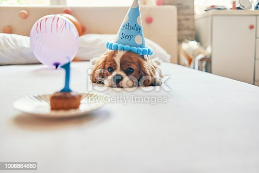 little puppy celebrating first birthday