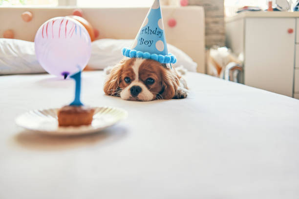 Not so enthusiastic about this birthday picture id1006864660?b=1&k=6&m=1006864660&s=612x612&w=0&h=07z52rigyagq2 pt91dfrcfhxruvkvwmwob7rlum0hq=