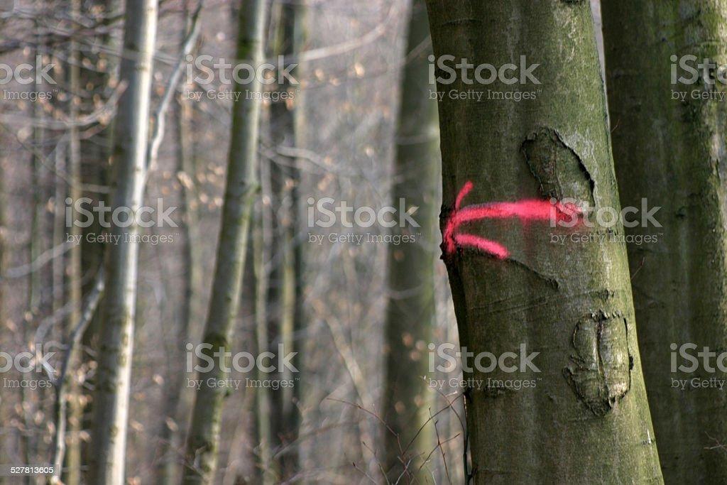 Note arrow on a tree stock photo