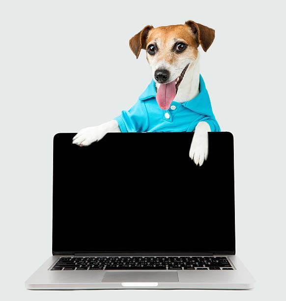 notebook-hund - coole liebessprüche stock-fotos und bilder