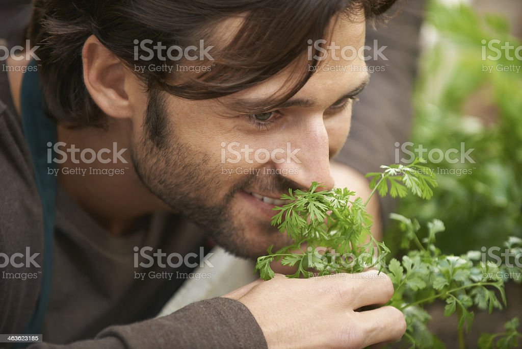 Nothing beats the smell of fresh herbs! royalty-free stock photo