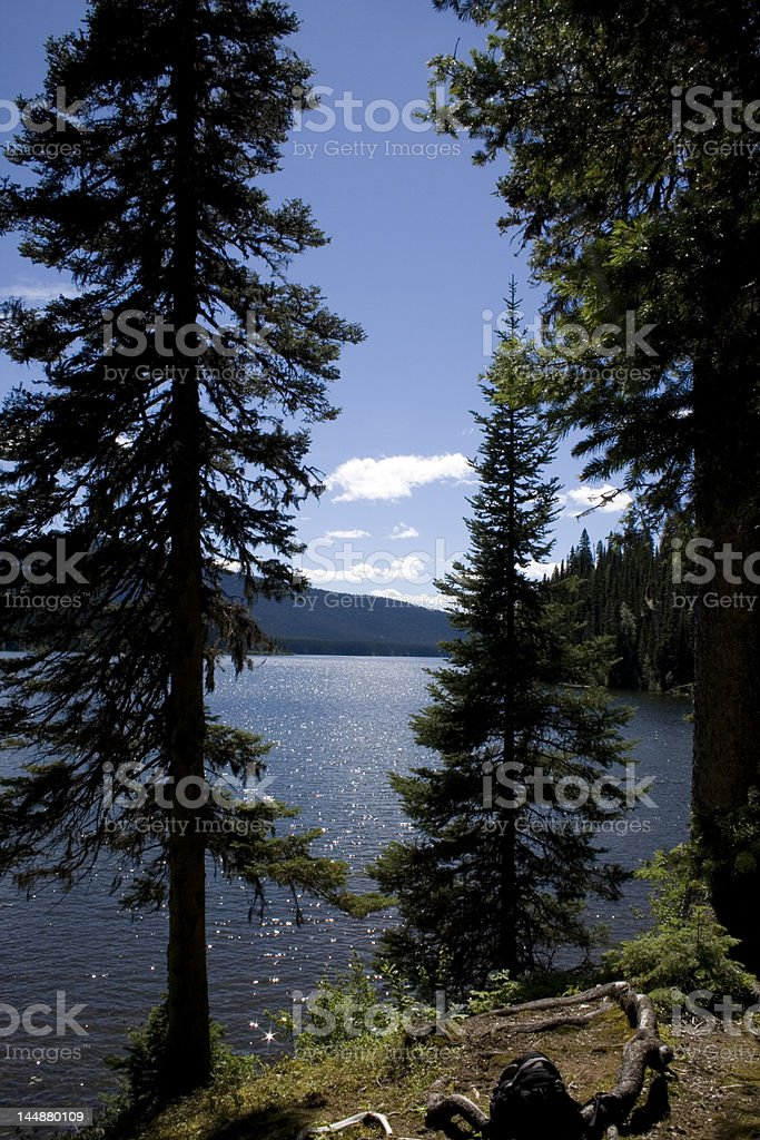 Nothing But Nature royalty-free stock photo