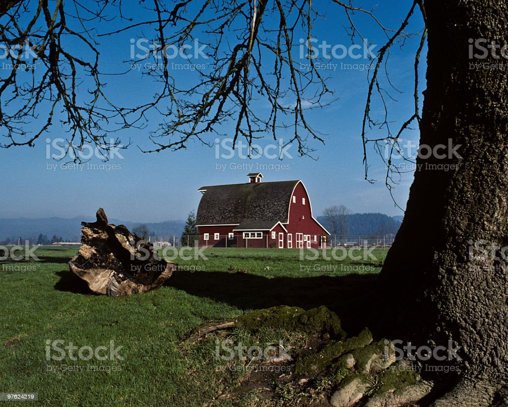 Red Barn and Tree royalty-free stock photo