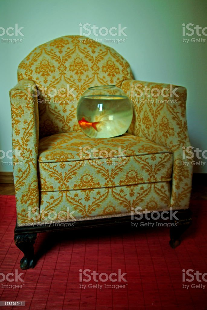 Notorious Goldenfish royalty-free stock photo