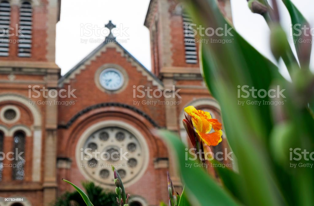 Notre Dame cathedral in Ho Chi Minh City, Vietnam, flower in the foreground stock photo