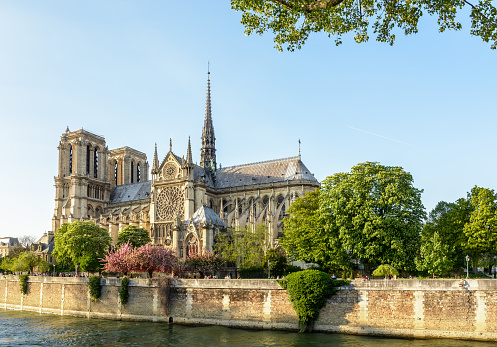 Notre-Dame de Paris cathedral under a clear blue sky at the end of a sunny spring day with the blooming Japanese cherry trees of the John XXIII park and the river Seine in the foreground.