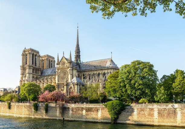 notre-dame de paris cathedral under a clear blue sky at the end of a sunny spring day with the blooming japanese cherry trees of the john xxiii park and the river seine in the foreground. - rose window stock pictures, royalty-free photos & images