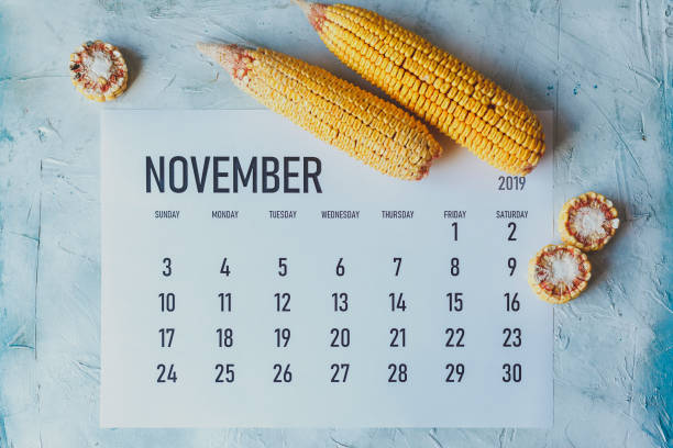 November Calendar. Autumn and Fall season concept. Harvest time. November Calendar. Autumn and Fall season concept. Harvest time. Top view to calendar and sweet corns. november stock pictures, royalty-free photos & images