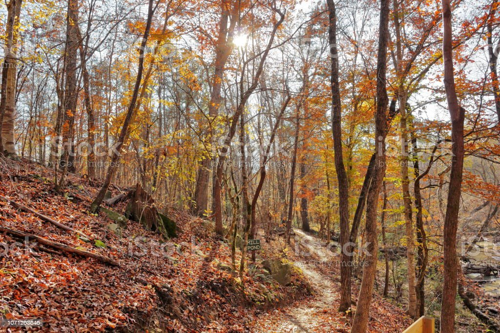 November trails in full fall color in South Carolina stock photo