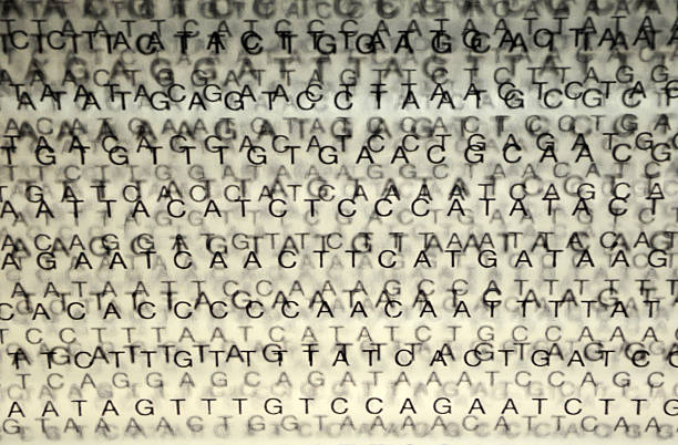 DNA Nucleotide Sequence Unaligned DNA sequences on glass.  nucleotide stock pictures, royalty-free photos & images