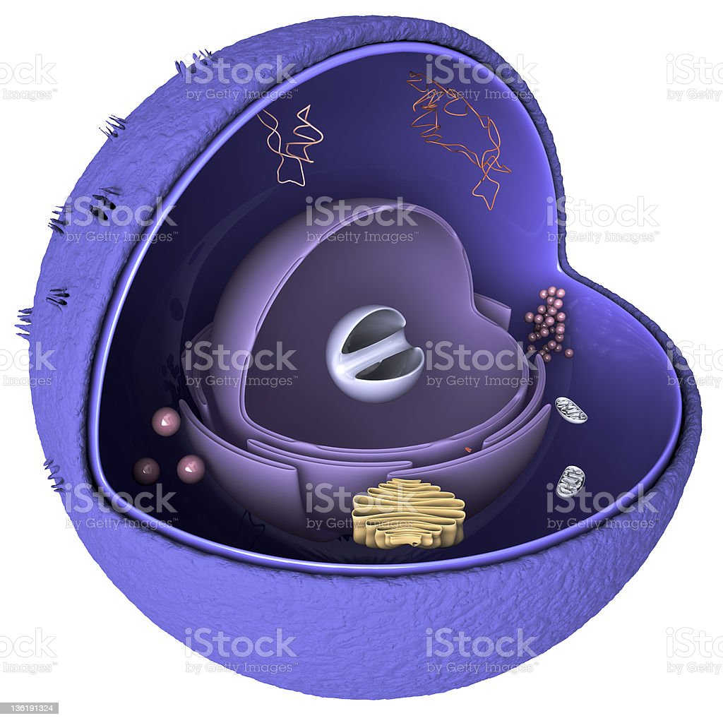 Nucleus cross section stock photo